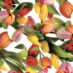 Tulipan Multicolor - Voksdug med tulipaner i flotte farver